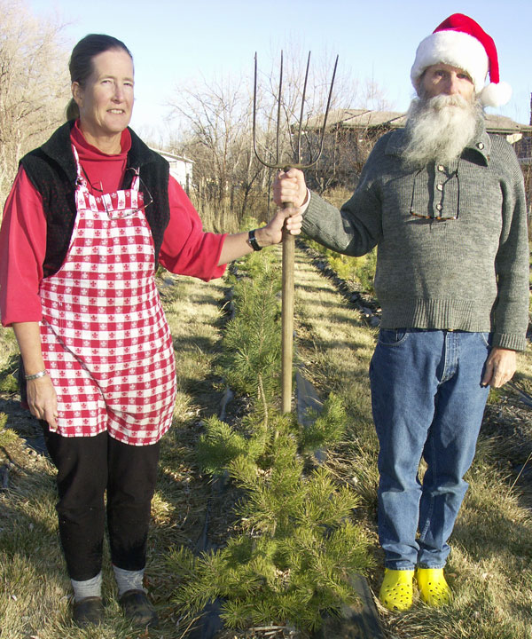 Working in the Christmas tree farm